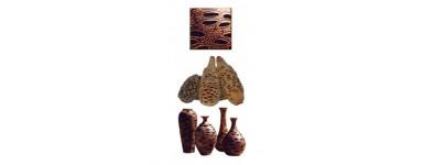 Noix de Banksia & Tagua